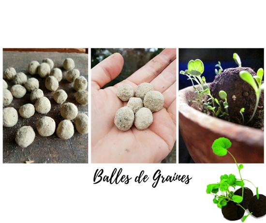 Echantillon Gratuit : Balles de graines – Kit découverte